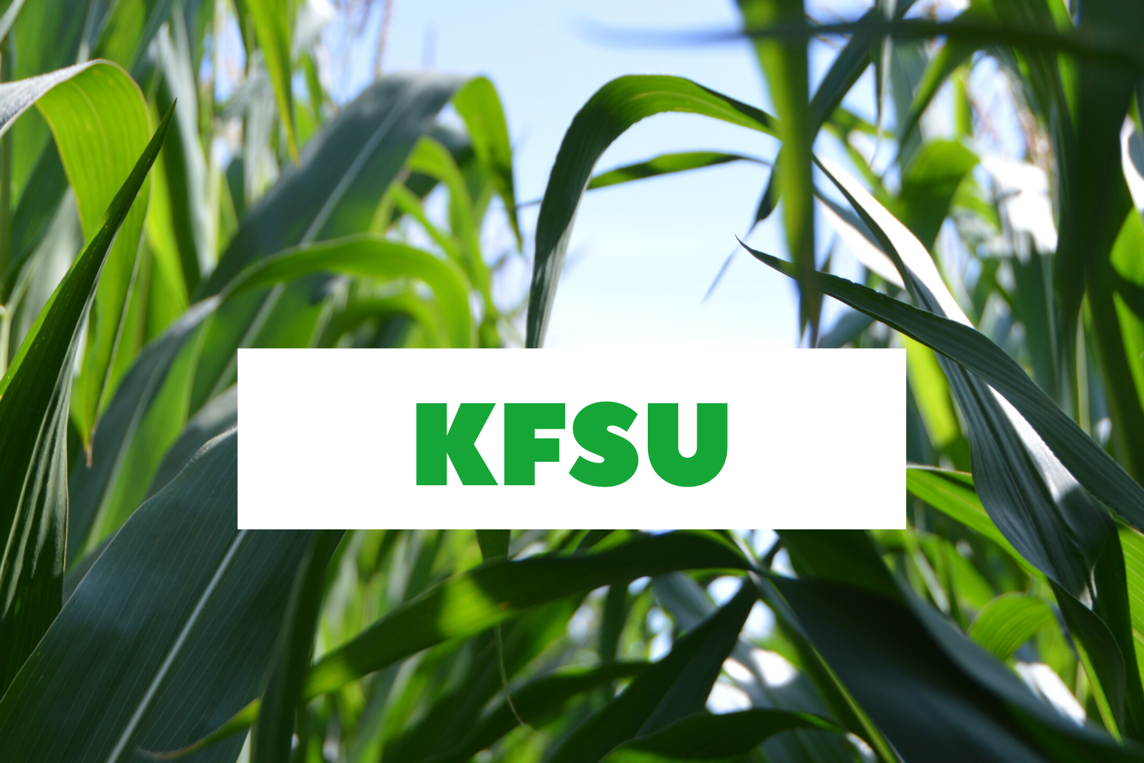 KFSU Background